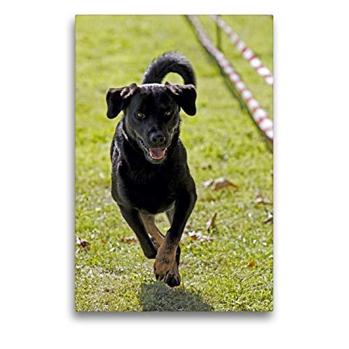 Premium Textil-Leinwand 50 x 75 cm Hoch-Format Rennender Hund | Wandbild, HD-Bild auf Keilrahmen, Fertigbild auf hochwertigem Vlies, Leinwanddruck von Martina Berg