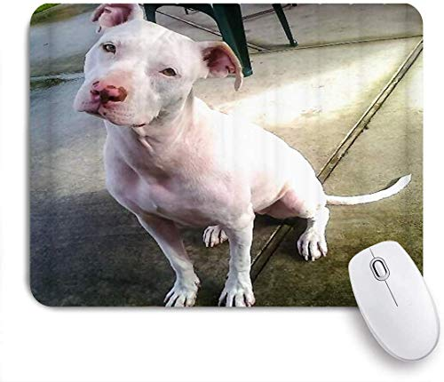 AOOEDM Alfombrilla de ratón American Pitbull Terrier, Blanco, Blanco, Pit-Bull, Alfombrilla de ratón artística Personalizada, Base de Goma Antideslizante para Ordenadores, portátiles, Accesori