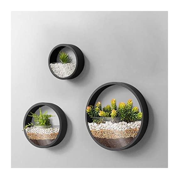 Wistwoxxon 3 Pack Set Wall Planters,Modern Round Glass Wall Planter Succulent Planter Circle Iron Hanging Planter Vase for Herb,Small Cactus Perfect for Balcony, Room and Patio Decor (Black) 1 ♪♪Appearance and Design:Round metal hanging wall planter with glass baffle for planting real or faux small plants, flowers, succulents, air plants or cacti, Every part has been carefully designed, simple curves outline the simple and stylish atmosphere, Add a splash of color and style to your indoor spaces ♪♪Attention & Installation: Mounting with screws or wall hooks, ATTENTION: We prefer succulent plants,air plant,faux plants and some plants which doesn`t need much water. Because water will drip from 3 mount holes on the back of wall planter. ♪♪Material and Size: Stabilized iron alloy metal with powder coating ensures long lasting color and withstands extreme weather conditions. Tempered and limpid glass feasts your eyes, add visual intrigue to this wall hanging. Do not rust and no unpleasant smell. Size:Large:Thickness:5cm/1.9inch Diameter:30cm/11.8inch, Medium:Thickness:5cm/1.9inch Diameter:20cm/7.8inch, Small:Thickness:5cm/1.9inch Diameter:15cm/5.9inch