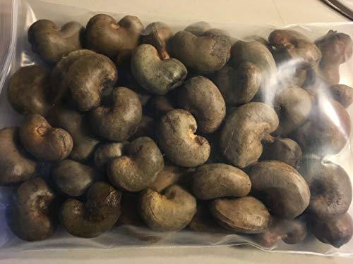 FERRY Bio-Saatgut Nicht nur Pflanzen: Thai Cashew-Nuss-Frucht-Samen 50 Samen