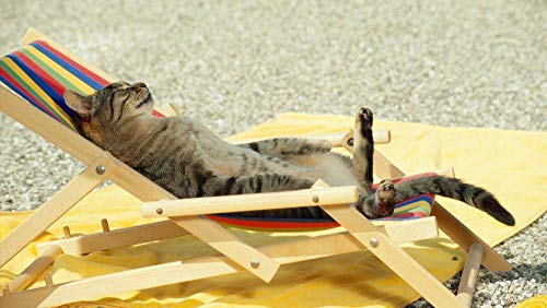 Lsping Puzzel 1000 Teile Katzen Lounge Chair Tiere 50x70cm