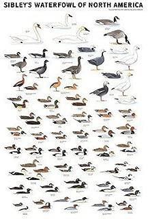 Best duck identification chart Reviews