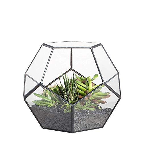 Terrario geometrico per succulente, trasparente, formato da dodici lastre pentagonali in vetro, Clear, Nero