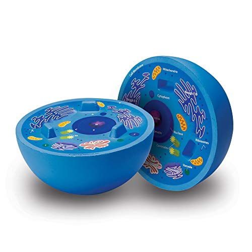 Learning Resources Cross-Section Animal Cell Model, Soft Foam, Early Biology, Classroom Teaching Aid, Grade 4+, Ages 9+