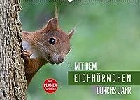 Mit dem Eichhoernchen durchs Jahr (Wandkalender 2022 DIN A2 quer): Eichhoernchen, ueber das ganze Jahr beobachtet und fotografiert (Geburtstagskalender, 14 Seiten )