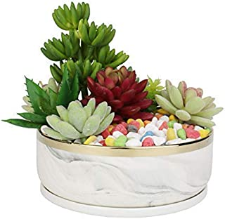 Best cactus plant bowl Reviews