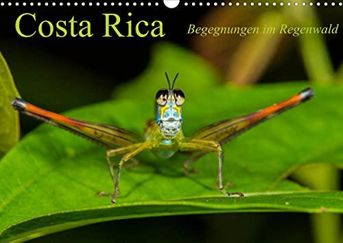 Encuentros en la selva de Costa Rica
