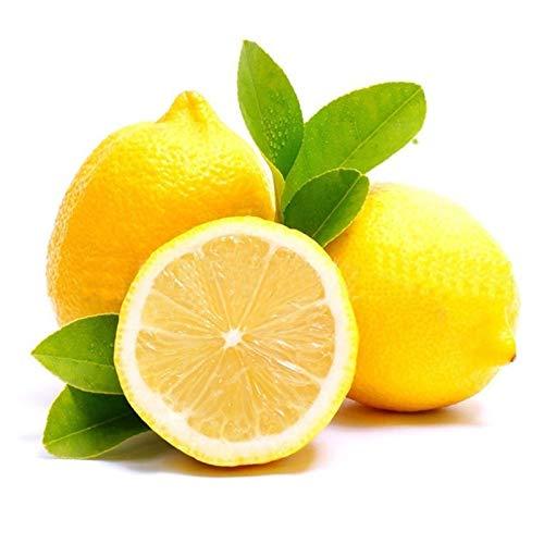 AchidistviQ 10 Unids Amarillo Limón Semillas De Frutas Frescas Bonsai Enano Semillas De Árbol De Limón Para El Hogar Jardín Planta En Maceta Interior Exterior Decoración Semillas de limonero