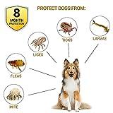 IMG-1 2 pcs collare antipulci cane