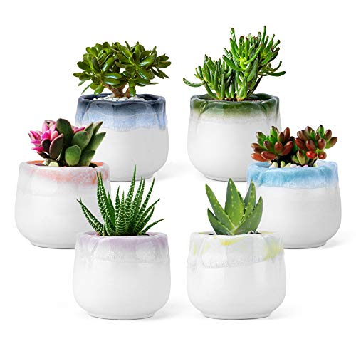 6cm Mini Blumentöpfe Keramik Sukkulenten Töpfe Kaktus Pflanze übertöpfe - Dekorvase Sukkulenten Töpfe Serie 6 Farben Set