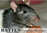 Ratten - Gelehrige Haustiere (Wandkalender 2021 DIN A3 quer)