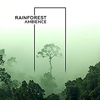 Rainforest Ambience: Relaxing Music with Tropical Sounds of Nature