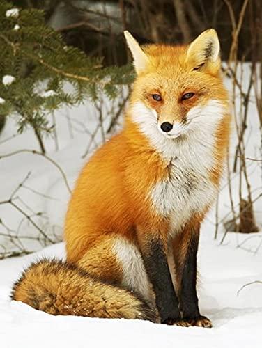 Pintura al óleo por número Fox Animal Dibujo sobre lienzo Pintura por número Paisaje de invierno Regalos pintados a mano A10 40x50cm