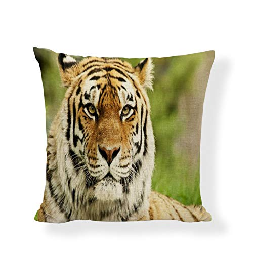 DXSERCV Fundas para Cojines Tiger Grassland Living Room Sofá Silla de Yoga Suministros de decoración del hogar Funda de cojín 45X45Cm