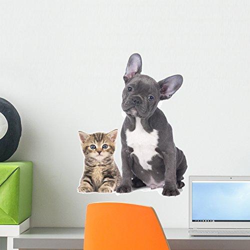 Wallmonkeys French Bulldog Kitten Wall Decal Peel and Stick Graphic (18 in H x 14 in W) WM362682