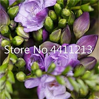 GEOPONICS SEMILLAS: 150 piezas/bolsa de Fresia de la planta, Fresia Fresia flor de Bulbos de flores Bonsai Flores de la orquídea Freesia Rizoma flores bulbosas: 3