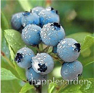 Bloom Green Co. Â¡Venta!100 Unids/bolsa Bonsai de arándanos Fruta orgánica comestible Planta frutal Enano Arándano Bonsai Ãrbol Planta en maceta para jardín de casa: 1