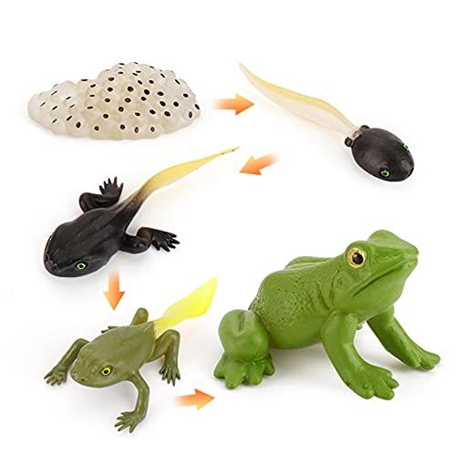 GLJYG 1 ciclo de vida del crecimiento, modelos de ciclo de vida animal, estadios de animales, números, ciclo temprano, juguete educativo para niños, rana.