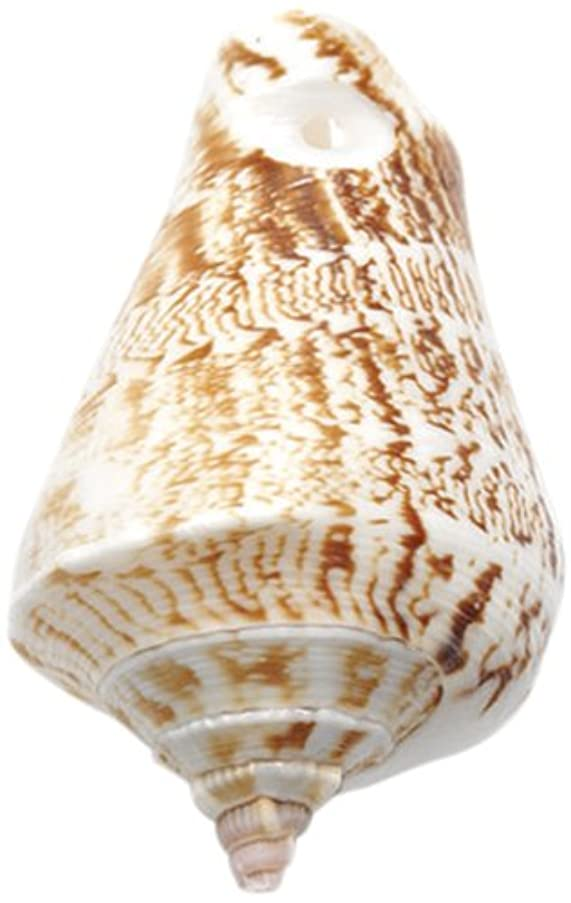 Shipwreck Beads India Shell 1-Hole Cone Snail Beads, 40-50mm Average, 50-Pack