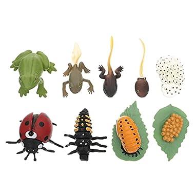 Happyyami 2 Sets Simulation Animal Life Cycle Model Education Frog and Ladybug Growth Cycle Figurine Insect Life Cycle…