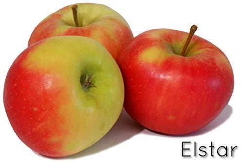 \' Elstar \' - Bodensee-Apfel vom Rosenhäusle (5kg)