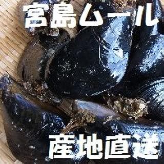 天然「活き宮島ムール貝」1kg