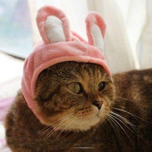 ZooooM なりきり アニマル 動物 モチーフ デザイン 猫 ネコ キャット 用 被り物 かぶりもの おしゃれ 簡単 装着 着せ替え ( ウサギ Ver ) ZM-PC1410-USAGI