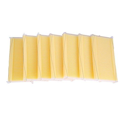 Jacksking Marcos de Colmena 7 Piezas, Auto Flujo Peine Miel Miel plástico Apicultura Equipo de Equipo de Cosecha con 7 Tubos