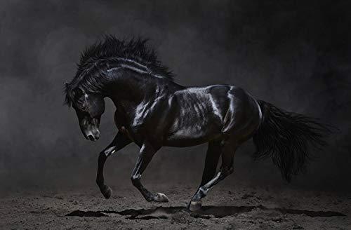 TRENDECOR - Cuadros Impresión Digital - Fotografía Caballo Negro sobre Cristal Templado (120x80)