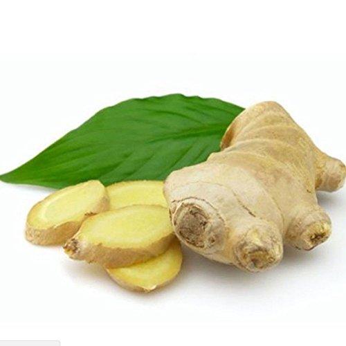 Rosepoem Graines de Zingiber 100 pcs Graines de gingembre Légumes Quatre Saisons