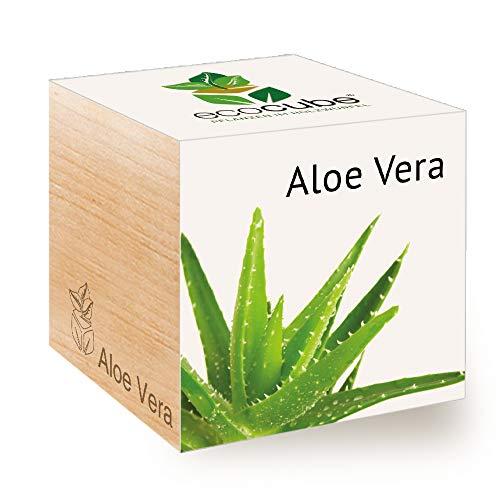 Feel Green Ecocube Aloe Vera, Nachhaltige Geschenkidee (100% Eco Friendly), Grow Your Own/Anzuchtset, Pflanzen Im Holzwürfel, Made in Austria