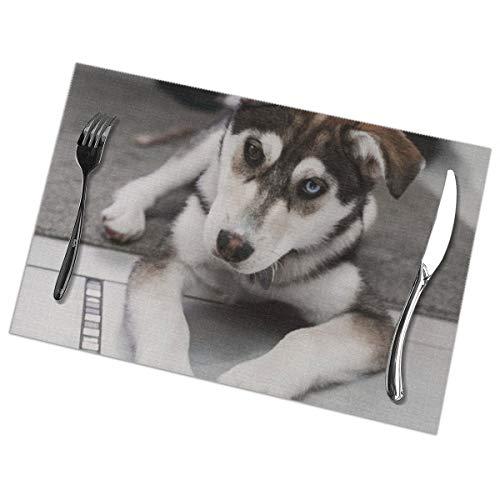 De Husky hond leggen op het tapijt in de buurt van de trap Placemat wasbaar voor keuken diner tafelmat, gemakkelijk te reinigen gemakkelijk te vouwen plaats Mat 12x18 Inch Set van 6