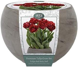 Kit para el cultivo de tulipanes Color Rojo Tipo