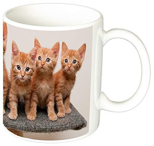 MasTazas Gatitos Gatos Kittens Cats K Tasse Mug
