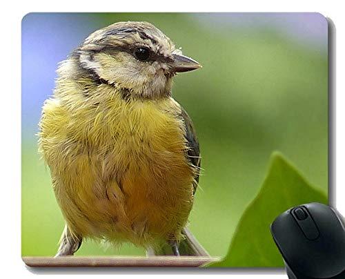 YENDOSTEEN Non-Slip Rubber Gaming Mouse Pad,Animal Bird Raptor Bird of Prey Flight Wings Non-Slip Rubber Base Mousepad
