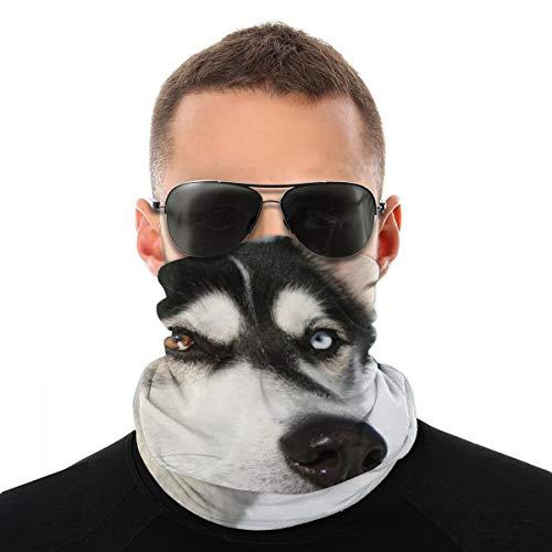 OUYouDeFangA Siberian Husky - Envoltura unisex multifunción de poliéster de secado rápido suave para el cuello, pañuelo de cabeza, pañuelo mágico de viaje, bufanda, máscara, polainas para el cuello para hombres y mujeres