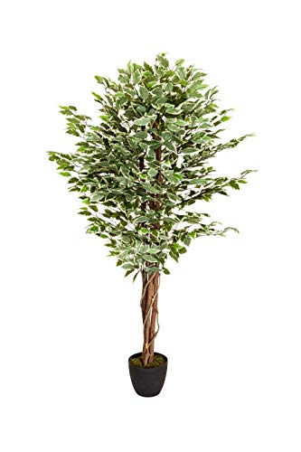 hjh OFFICE Kunstpflanze FICUS Benjamini Höhe 165 cm Grün/Weiß 1008 Blätter Deko Zimmerpflanze Birkenfeige künstlich, 871000