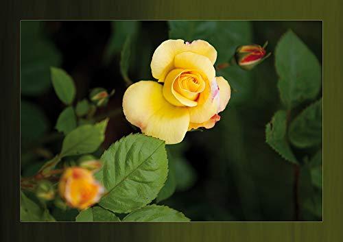 Postkarten Set Blumen - 10 identische Karten (Sommerblume auf Postkarte - Postkartenset Ansichtskarte) 17131
