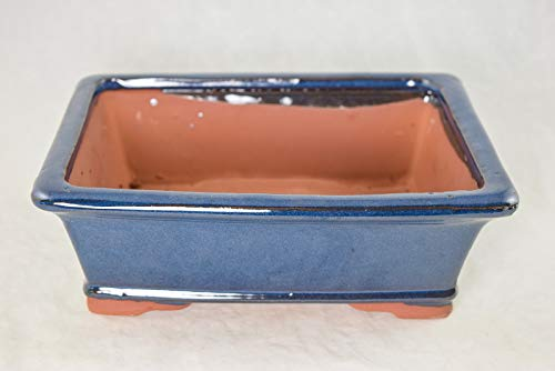 Rectangular Bonsai / Cactus & Succulent Pot 10'x 8'x 3.25' - Dark Blue Stain