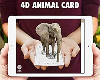 Animal 4D and Food 4D Flashcards