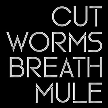 Breath Mule