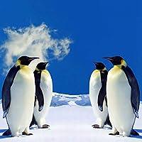 5Dダイヤモンド絵画ペンギンフルスクエアドリル動物ダイヤモンド刺繡モザイクラインストーン冬の家の装飾壁アートギフト