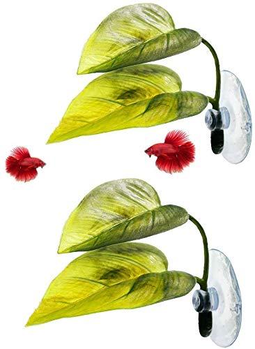 MBODM Betta Fish Leaf Hammock,2Pcs Betta Fish Leaf Bed Pad Plant Leaf Pad Fish...