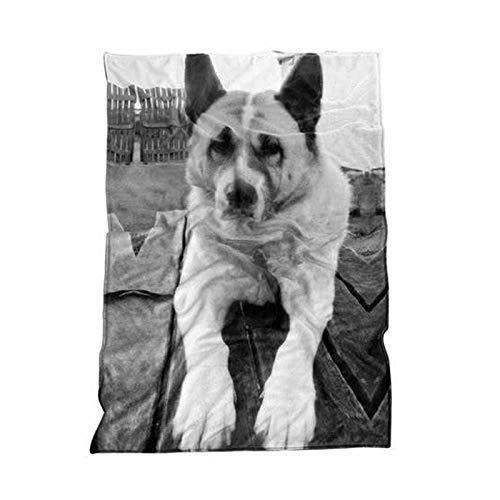 Fotodecke mit Eigenem Foto Tiermotiv Decke Kuscheldecke Tagesdecke Wohndecke personalisiert decke (150 * 120cm)