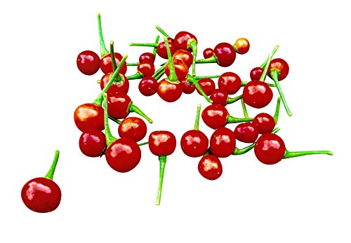 Rote Charapita Chili, 10 Samen -Teuerste Chili der Welt- WILDCHILI