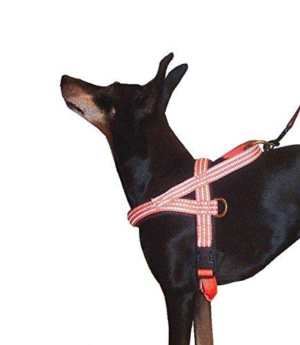 DTE Hundegeschirr (Limex baugleich) im Norwegerstil Neopren ORANGE/Reflex Gr. 3 60-70 cm