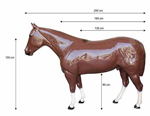 Pferd zerlegbar aus Kunststoff Quarter Umbria Reiten Pflege des Pferdes und Scuderia umbria-equitazione