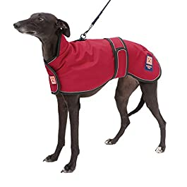 Ginger Ted Shower Harness Waterproof Greyhound Coat