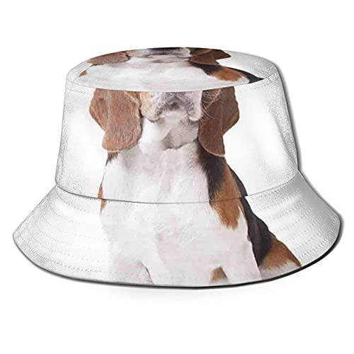 Beagle Dog Posing Loving Puppy Furry Friend Companion Domestic AnimalSun Sombrero estilo cubo plegable pescador playa sombrero protector solar A1