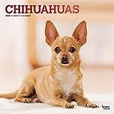 Chihuahuas 2020 - 16-Monatskalender mit freier DogDays-App: Original BrownTrout-Kalender [Mehrsprachig] [Kalender] (Wall-Kalender)